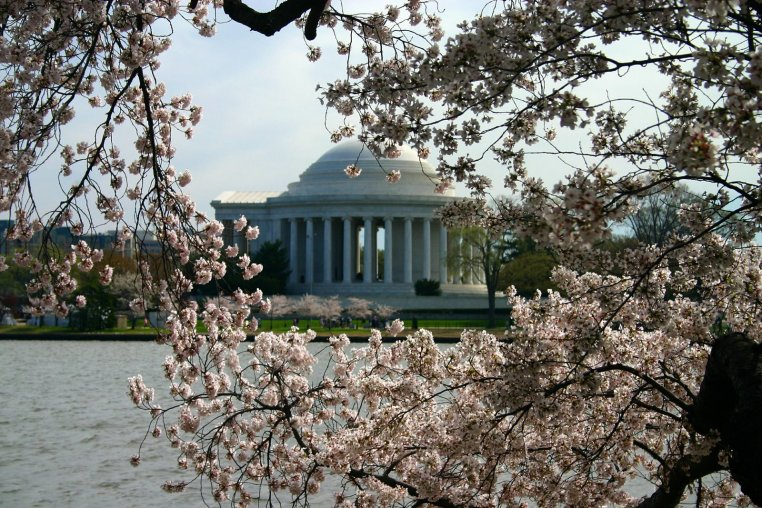 The Japanese Cherry blossoms and the Memorial provide great backdrops for each other.